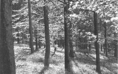 'Nuinn's Wood' Oxfordshire, photographed in the late 40's/early 50's