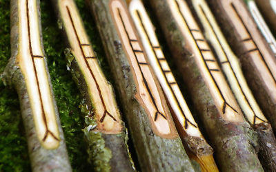 A Re-evaluation Of The Ogham Tree List