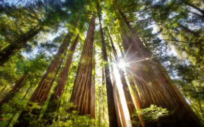Ecotherapy and Druidry