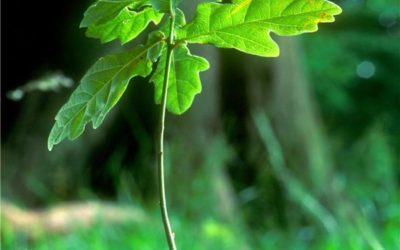 Walking the Talk – An Approach to Social Justice, Green Politics and Druidry