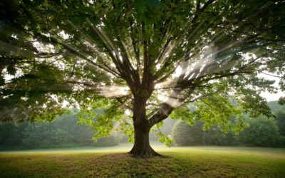 Nature and the Celtic Tree Calendar