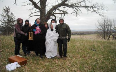 Meadow Wood Grove Seed Group