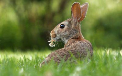 Spring Equinox – Alban Eilir