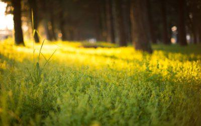 Summer Solstice – Alban Hefin