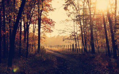 Autumn Equinox – Alban Elfed