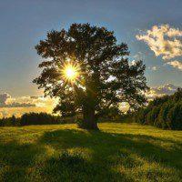 Celebrating Summer Solstice with the Spirit of Oak | 04/07/2020