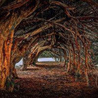 Celebrating Samhain with the Spirit of Yew | 17/10/2020