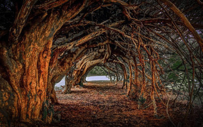 Celebrating Samhain with the Spirit of Yew