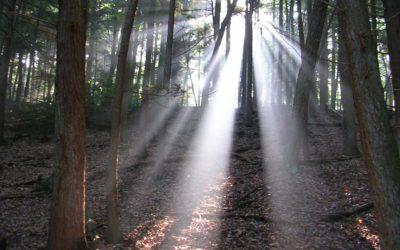 Läs olika författares syn på Vad Är Druidry?