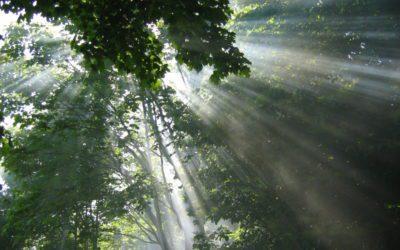 Modern Druid Nature Mysticism