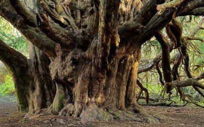Plant a Sacred Grove? No Problem!