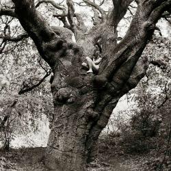 Naturism & Druidry