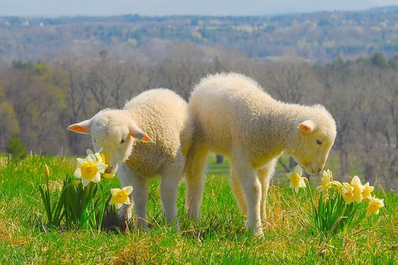 Spring Equinox/Alban Eilir Online Ceremony
