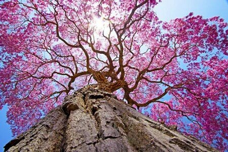 A Divine Tree Puts On A Glorious Display