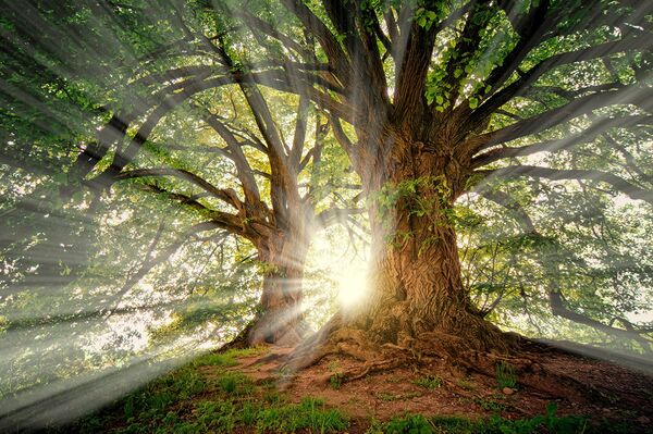 Finding My Sacred Grove