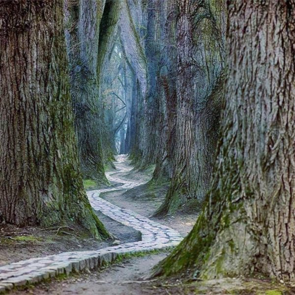 Druidism and the Way of the Dan